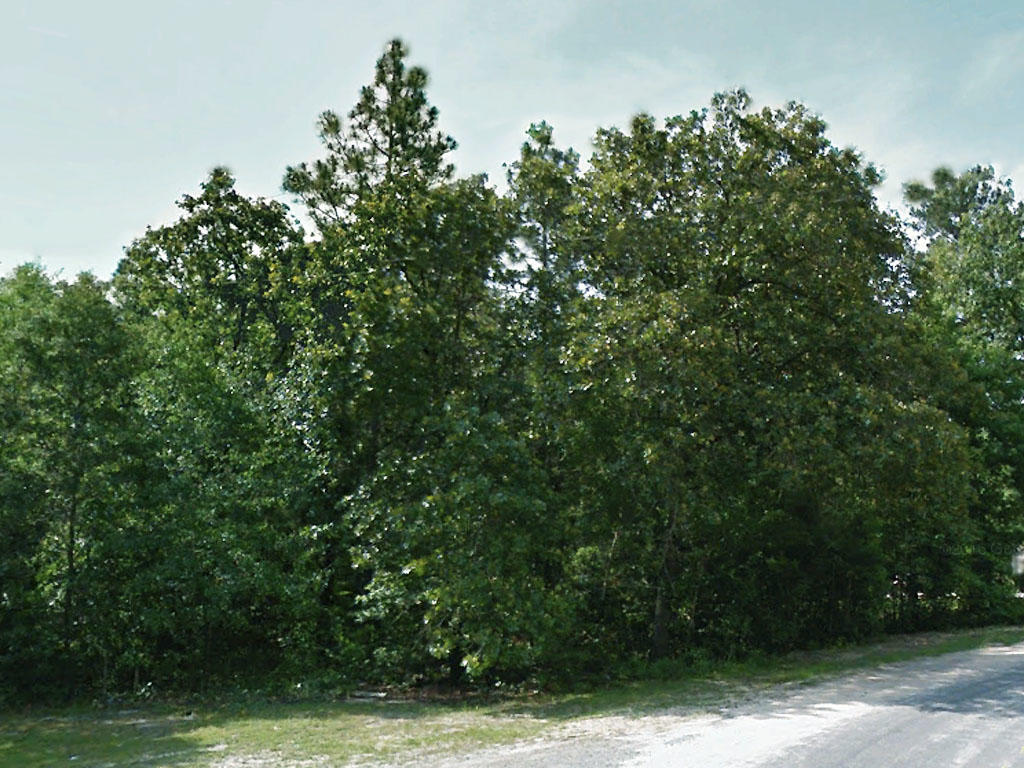More Than Three Quarters of an Acre in Lone Star State - Image 3