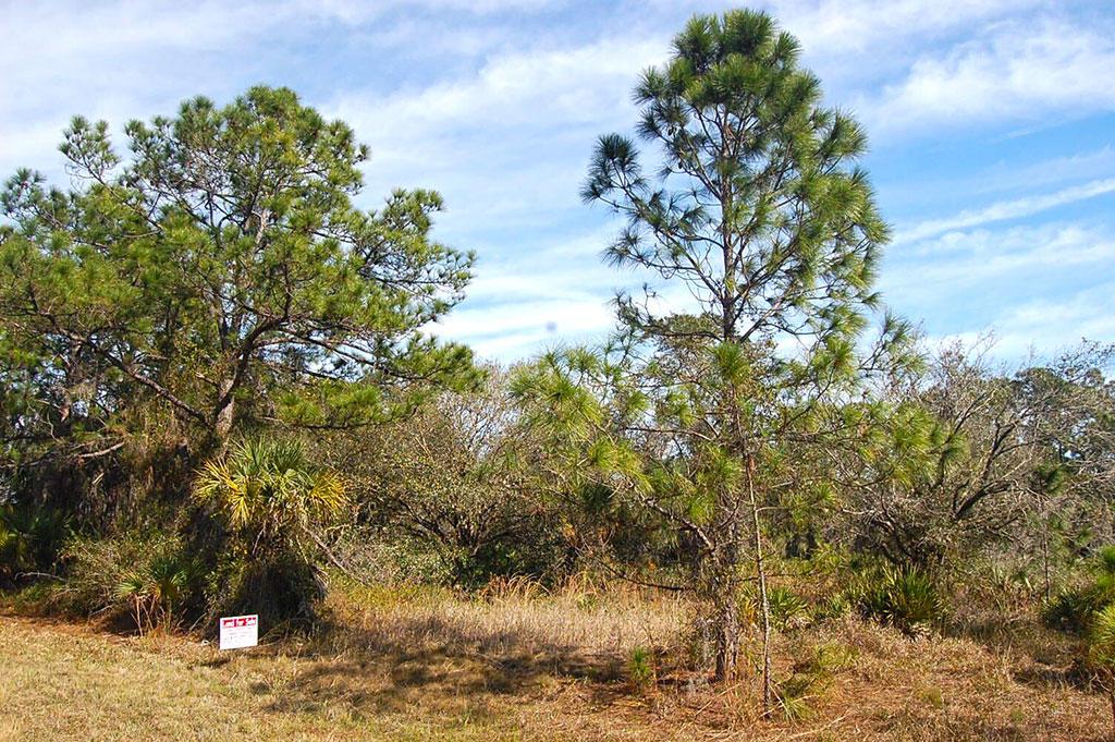 Beautiful Property Near Florida Coast - Image 2
