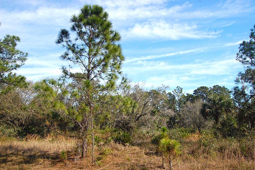 Beautiful Property Near Florida Coast - Image 3