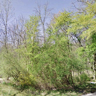 Suburban Oasis Near Hudson River - Image 1