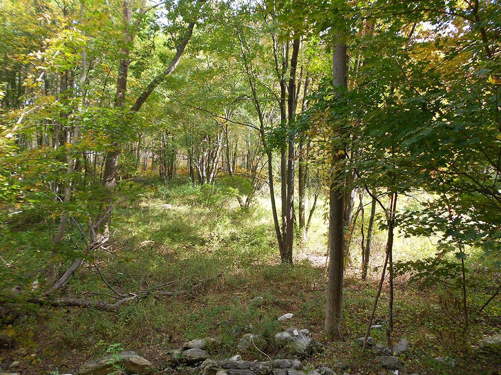 Rural Retreat on Stunning 6 Acres - Image 2