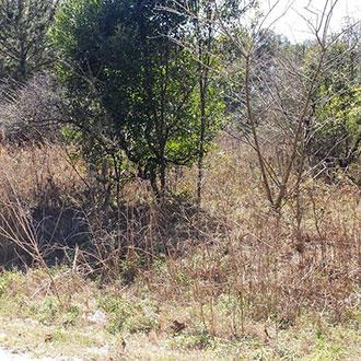 Quarter Acre Gem Outside of Belleview Florida - Image 0