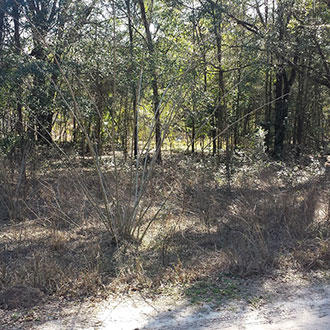 Treed Property in Belleview Heights Estates in Summerfield - Image 1