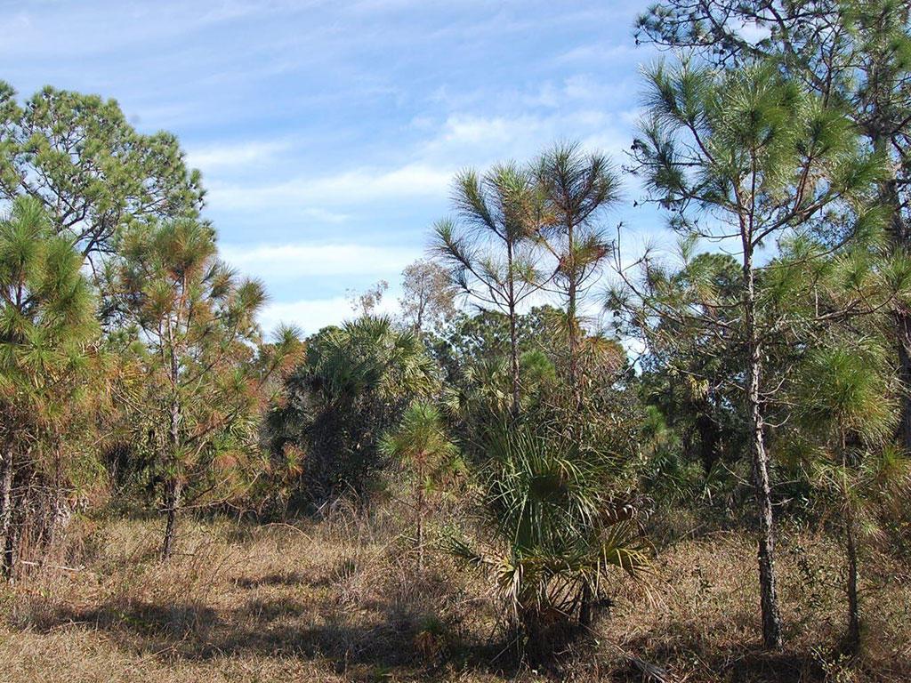 Amazing Property Under Sunny Florida Skies - Image 4
