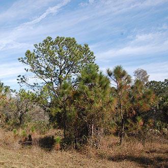 Amazing Property Under Sunny Florida Skies - Image 1
