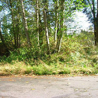 Dazzling Whidbey Island Lot Half Mile from the Beach - Image 1