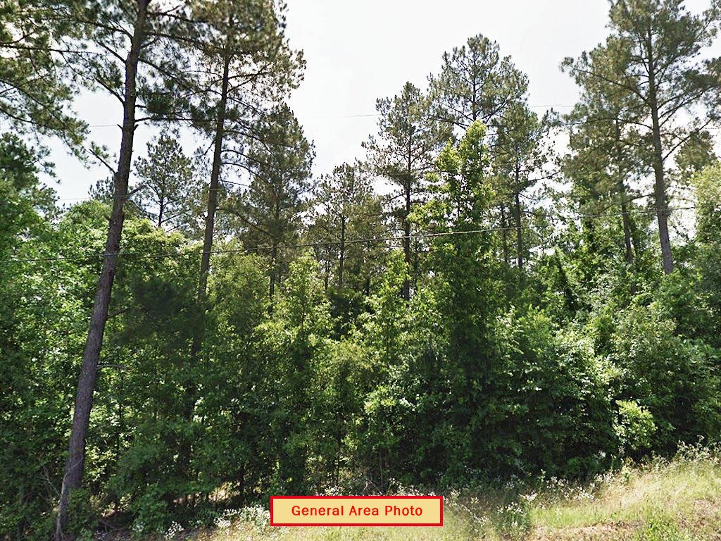Near Quarter Acre Beautiful South Carolina Gem - Image 2