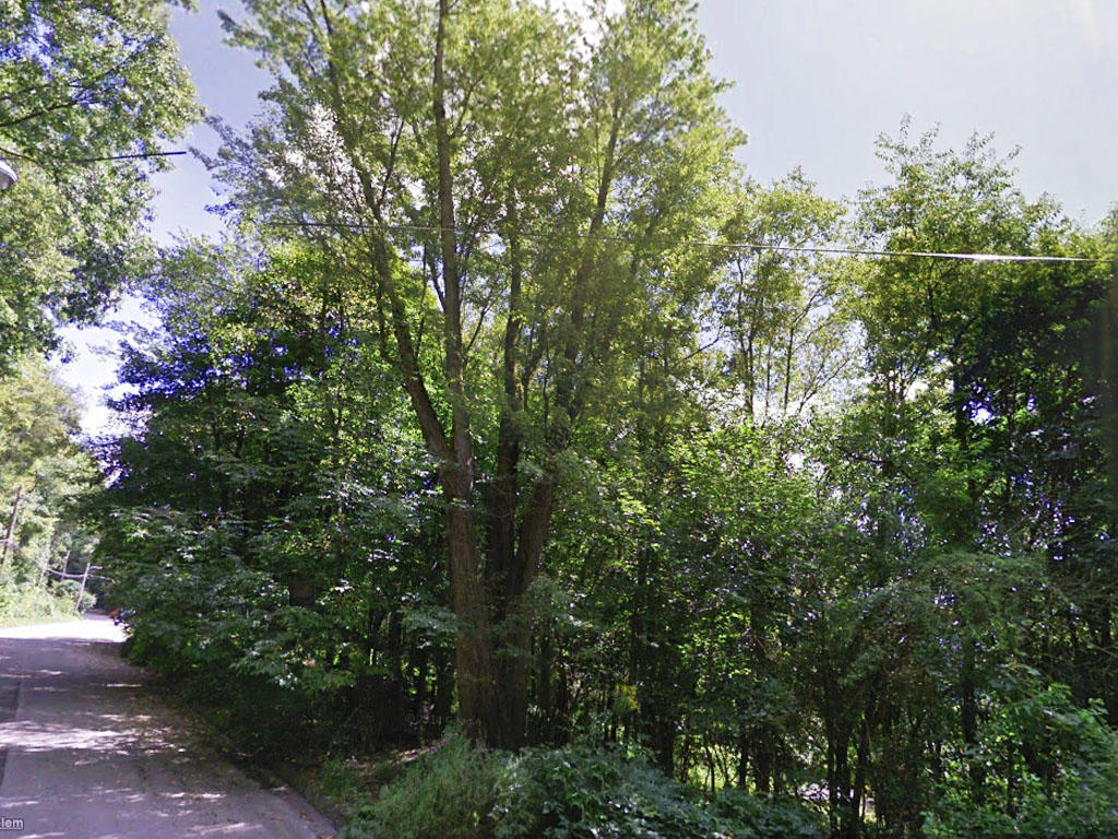 Stunning Forest Right in Your Backyard - Image 2