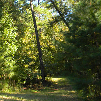 Large Texas Lot 90 Minutes from Houston - Image 1