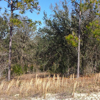 Well Over Half an Acre Parcel on Corner Lot - Image 0
