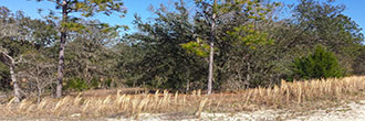 Well Over Half an Acre Parcel on Corner Lot
