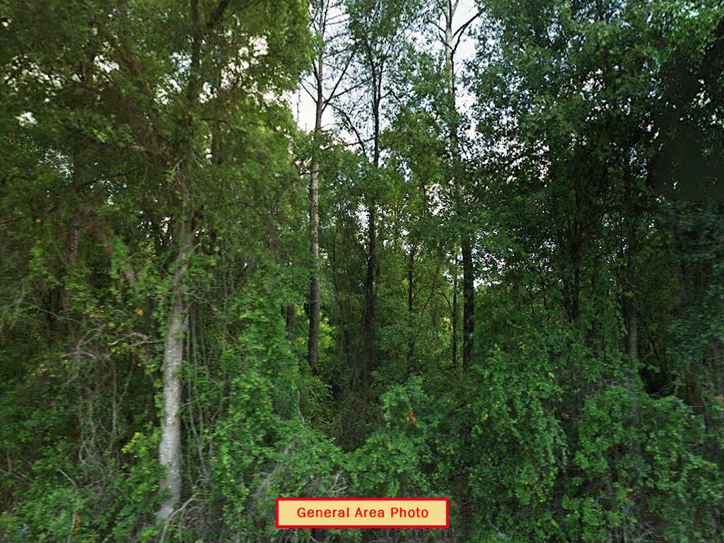 One Acre Property near Florahome - Image 3