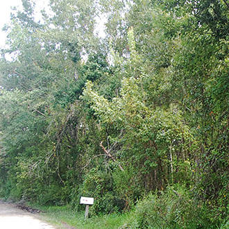 Rural Florida Gem 10 Miles from Gulf Coast - Image 1