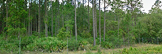 Rare Three Lot Florahome Florida Property