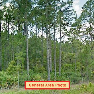 Rare Three Lot Florahome Florida Property - Image 1