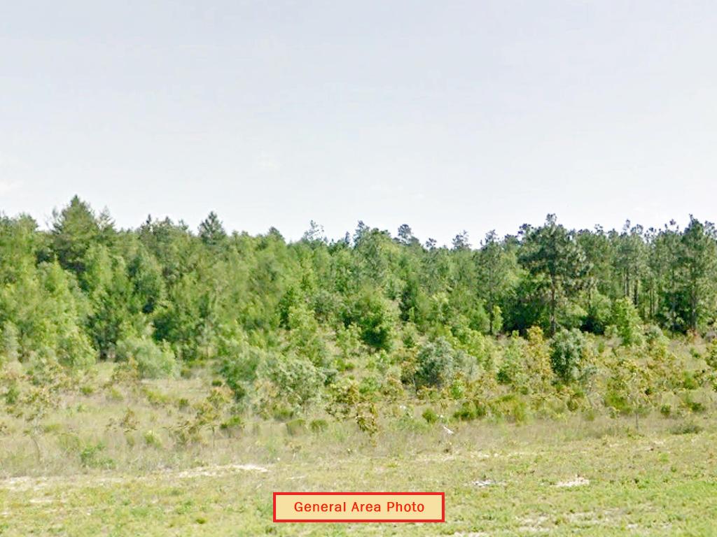 Mobile Home Friendly Lot in Interlachen Florida - Image 4