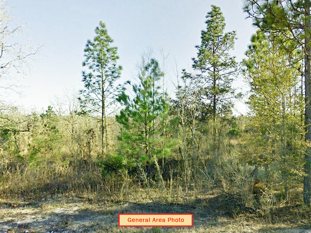 Escape to Quiet Neighborhood in Northern Florida - Image 4
