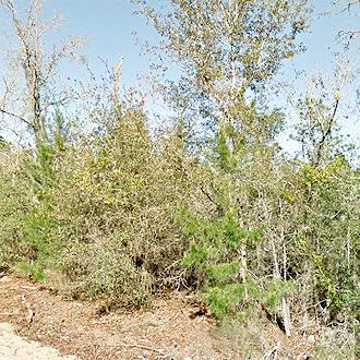 Sunny Property Near Trout Lake - Image 1