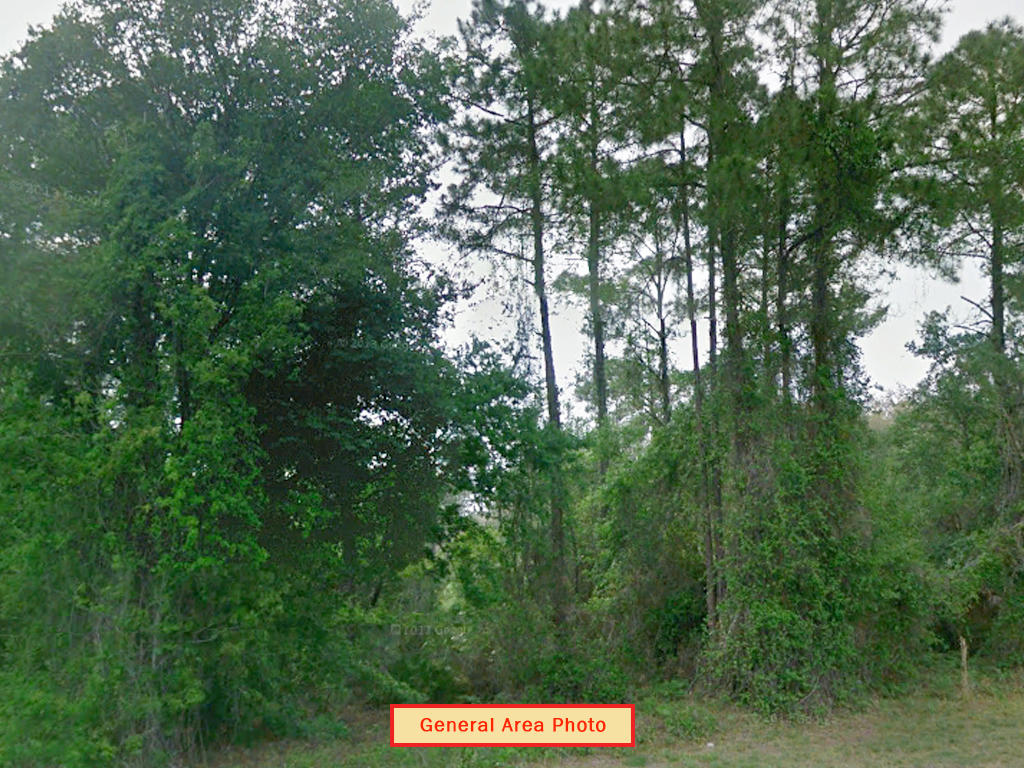 Two and A Half Acres in Crescent City - Image 4