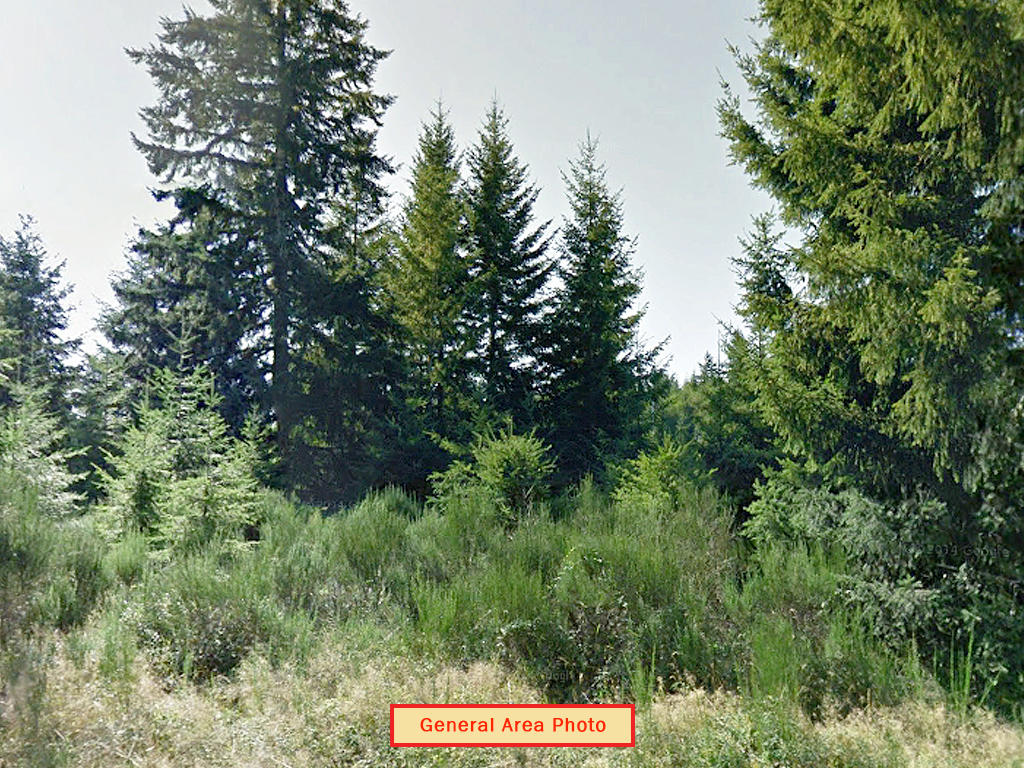 Secluded Land Opportunity in Beautiful Pacific Northwest - Image 4