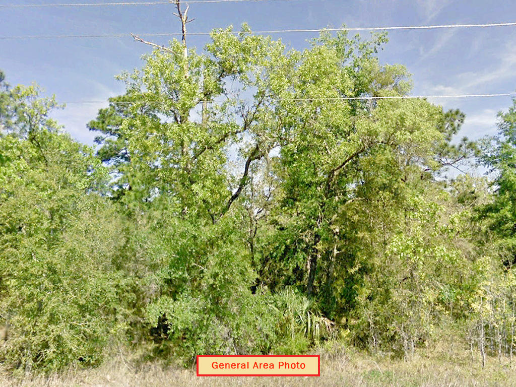 Spacious One Acre with Trees Between Dunnellon and Williston - Image 4