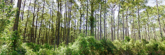 Spacious One Acre with Trees Between Dunnellon and Williston