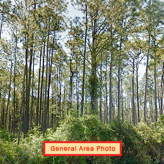 Spacious One Acre with Trees Between Dunnellon and Williston - Image 0