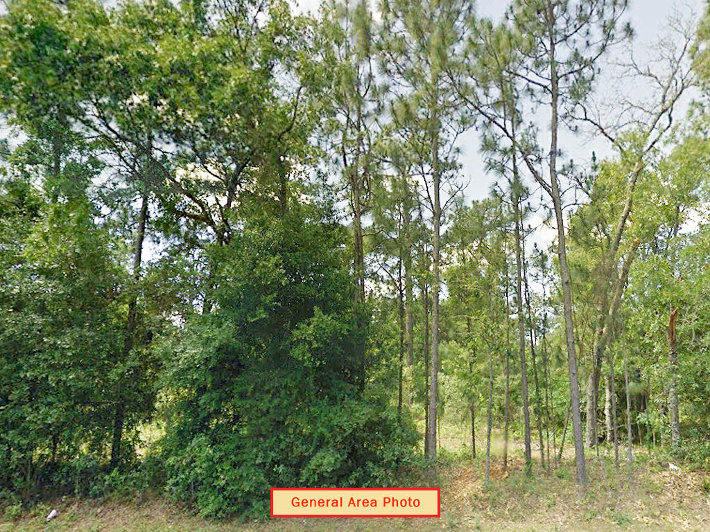 Great Lot in Keystone Heights Florida - Image 3