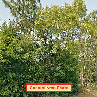 Great Lot in Keystone Heights Florida - Image 1