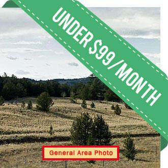 Five Acres in Central Colorado - Image 1