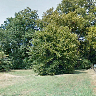 Pretty Lot Located in Forrest City - Image 0