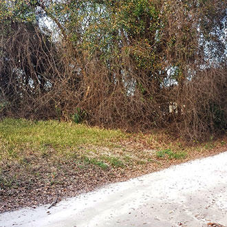 Great Belleview Property in Developed Neighborhood - Image 0