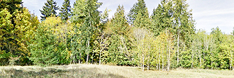 Olympic Peninsula Property in Beautiful Area