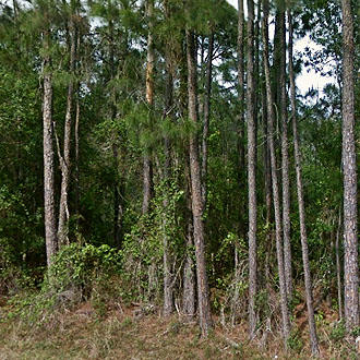 Spacious 2 Acres in Beautiful Sunshine State - Image 0