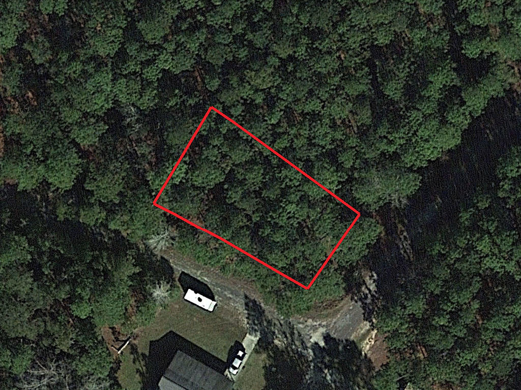 Wooded Eastern Texas Property - Image 2