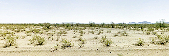 Spacious Desert Land with Plenty of Privacy
