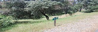 Tree-Covered Land Near Pine Mountain Lake