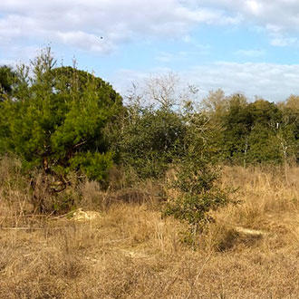 Explore this Land Just Outside of Ocala - Image 0