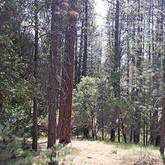 California Homesite Outside of Yosemite National Park - Image 0