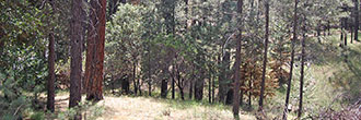 California Homesite Outside of Yosemite National Park