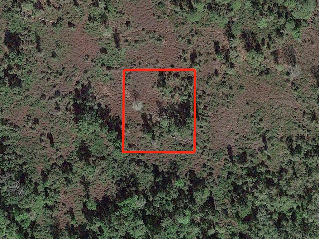 1 Acre Satsuma Undeveloped Road Access Lot - Image 1