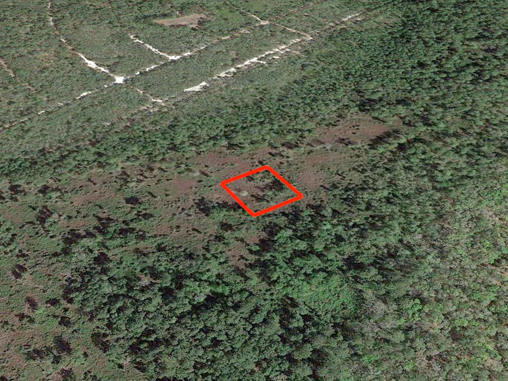 1 Acre Satsuma Undeveloped Road Access Lot - Image 2