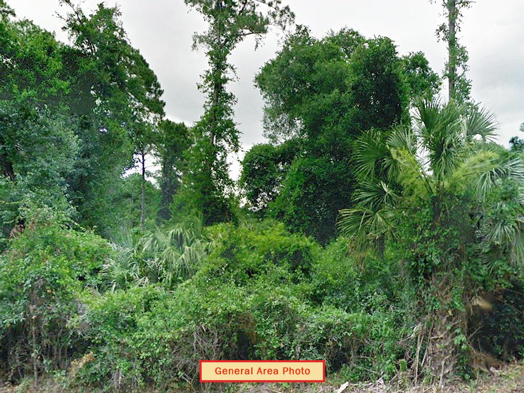 1 Acre Satsuma Undeveloped Road Access Lot - Image 3