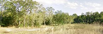 1 Acre Satsuma Undeveloped Road Access Lot