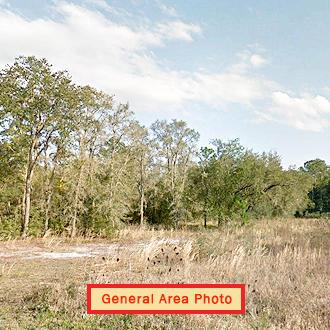 1 Acre Satsuma Undeveloped Road Access Lot - Image 0