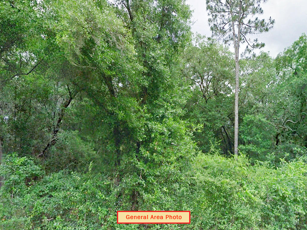 1.63 Acre Undeveloped Road Access Lot - Image 3