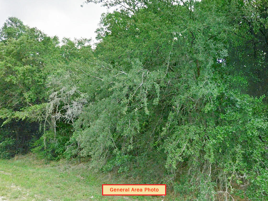 Satsuma Residential Lot with Dirt Road Access - Image 3