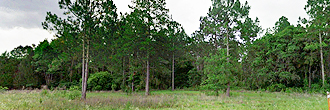 Satsuma Residential Lot with Dirt Road Access