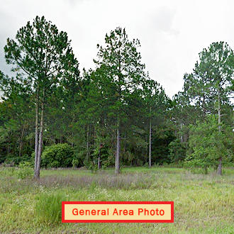 Satsuma Residential Lot with Dirt Road Access - Image 0