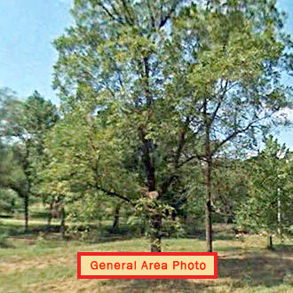 Secluded Seven Acre Haven in Central Missouri - Image 1